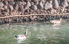 Funchal, Ilha da Madeira (W. Pereira) Tags: brasil brazil sampa sãopaulo wpereira wanderleypereira europa funchal ilhadamadeira madeiraisland nikon portugal velhocontinente wpereiraafotografias wanderleypereirafotografias