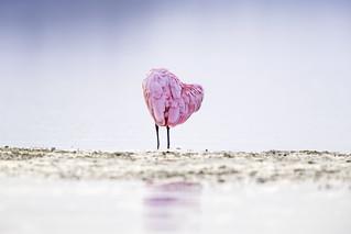 Spoony Heart