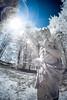 2-watermark-L (Brian M Hale) Tags: rokinon 12mm fisheye fish eye tower hill botanic botanical garden boylston ma mass massachusetts outside outdoors nature natural spring brian hale brianhalephoto usa statue flare sun solar glare ir infra red infrared 720nm kolarivision