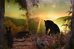American Black Bears (Adventurer Dustin Holmes) Tags: 2018 wondersofwildlife museum bears taxidermy animal animals americanblackbears blackbears animalia chordata