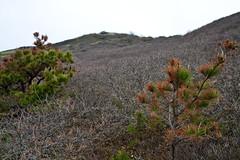 Cape Cod Mountains (brucetopher) Tags: pamet truro hike hiking trail dune dunes sanddune outdoor nature natural nationalpark wilderness purple underbrush bushes scrubbrush hill steep climb