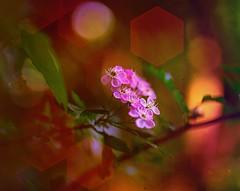 Blossom .. (Julie Greg) Tags: flower blossom colours canon5dmarkiv texture tree park nature