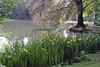 Rheydt-Stadtwaldweiher im Frühling (borntobewild1946) Tags: mönchengladbachrheydt rheydtstadtwald rheydtstadtwaldweiher weiher pond 21052018 springlike frühlingshaft frühling springtime