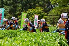 いざ! (anmindofu1) Tags: 2018 may nikon japan kourakuen okayama teapicking