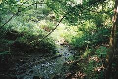 Paradise Bottom stream (knautia) Tags: paradisebottom leighwoods bristol england uk may 2018 film ishootfilm olympus xa2 fuji superia 400iso olympusxa2 nxa2roll14 forestrycommission woods arboretum