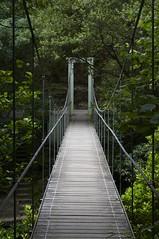puente colgante sobre el Eume (briveira) Tags: bridge parque ro river way puente corua cross natural path trail hanging sendero fraga pontedeume colgante eume briveiracom