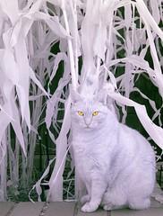 Orange cat (smashz) Tags: cat ir infrared