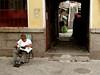 Reading (horses and tigers) Tags: china topv111 tag3 taggedout reading tag2 tag1 qingdao shandong kiss2 kiss3 kiss1 kiss4 kiss5