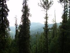 Trees (shakirhussain) Tags: nathiagali
