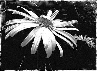 IMT Challenge ~ Black & White
