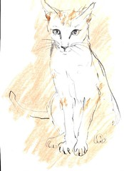 Cat (HagitSha) Tags: orange cats colors cat portraits drawing kitty drawings kitties
