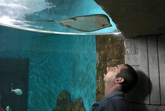 My name's Ray (Ray Byrne) Tags: fish water aquarium ray north seaworld northeast tynemouth fishface bluereef raybyrne chinless onetoone byrneout byrneoutcouk webnorthcouk