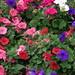Florals in Charles English Garden