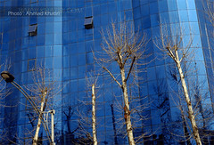 Blue 1 (ahmad khatiri) Tags: trees building   biger