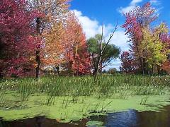Lac Champlain, Qubec, Canada (**Anik Messier**) Tags: autumn lake canada fall leaves automne colours shot calendar couleurs qubec 100views lacchamplain calendarsho