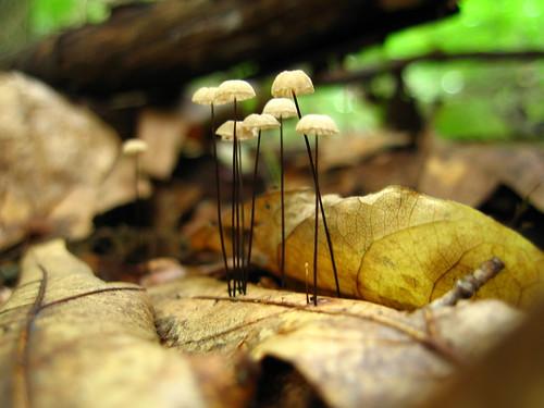 Dainty Mushroom Village
