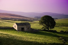 farmhouse (tricky (rick harrison)) Tags: pink house tree farmhouse landscape countryside purple sheep farm yorkshire farming hills filter horton peaks dales hortoninribblesdale ribblesdale printforsale