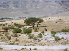 Neghev (.arzan) Tags: 2006 holyland deserto fotoincatenate neghev
