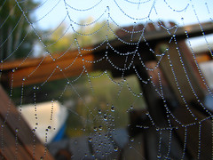 Early Morning on the Dock (ick Harris) Tags: ontario canada cottage spiderweb latesummer lakestpeter