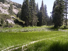 Alpine Meadow (TranceMist) Tags: california usa lake mountains water trekking landscape meadow sierra alpine backpacking sierranevada alpinelake waterlillies highsierra anseladamswilderness wolffpack wp2006 wolffpack2006