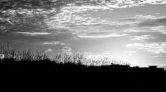 Silhouette (C) 2006