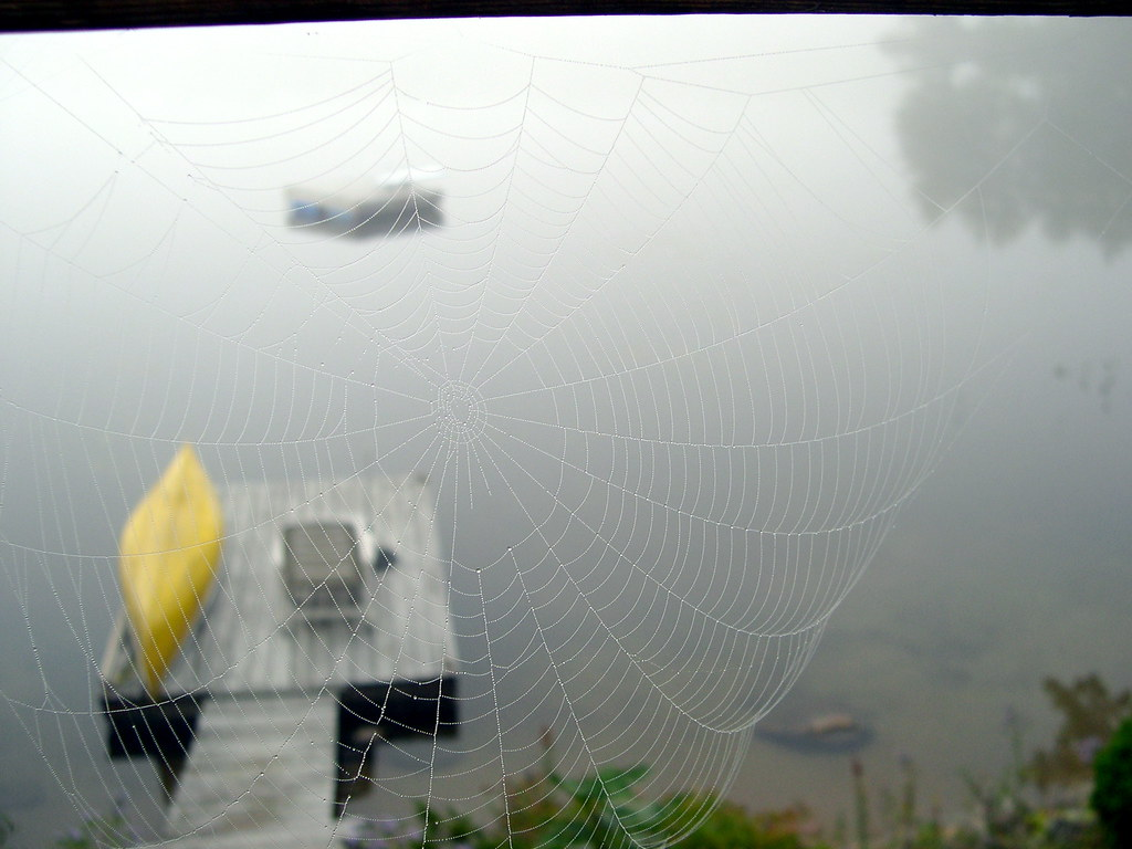 A spider web filter