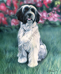 Tibetan terrier Spencer (Katja Turnsek) Tags: pet by portraits kiss terrier tibetan spencer agi katja