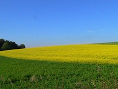 field (the-father) Tags: summer field germany coolest 2pair edeldorf