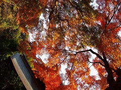 autumn at zuisenji (michenv) Tags: autumn sky tree japan temple kamakura michelle autumnleaves autumncolours         zuisenji  michenv
