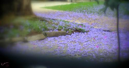 Lilac Sidewalk, por Cristina Gorissen, em CC