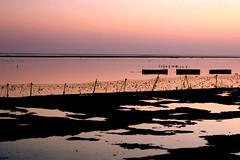 diam (Farl) Tags: travel pink blue sunset sea bali seaweed colors silhouette indonesia boats coast farm horizon farming shore nusa nusadua agronomy cottonii carrageenan kappaphycus kappaphycusalvarezii kutuh alverezii