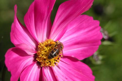 Pollen (2)