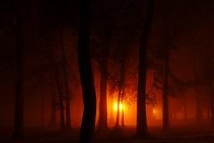 The Fog Returns.