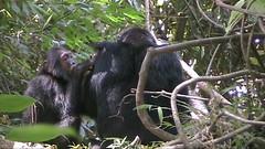 Tanzania - tape 02-055-01_0004