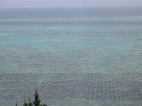 Ocean Farms