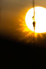 Once a Flower 2 - IMG_5148_750 (philippecarrier) Tags: autumn sunset orange sun abstract macro automne hair dusk flames backlit multicolor outaouais langegardien