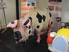 Gloucester Spot, Indoor Market, Gloucester 7 December 2016 (Cold War Warrior) Tags: model pig gloucester market