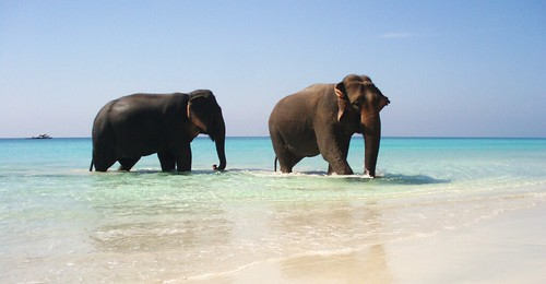 The paradise exists: spot the 2 elephants in the crystal clear water