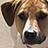 Dogs/Dog Packs/Strays