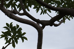 DSC08322 (SnowM28) Tags: kanagawa yamato leaf park green shadow sony a5000