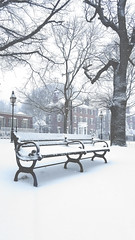 20180313_155118 (FormalElements) Tags: salem blizzard snow witches witchmuseum mass ma massachusetts north east graveyard beautiful seaport bench park tree old jail