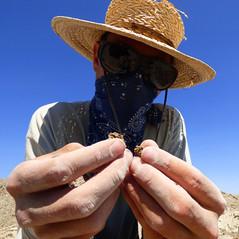Peds (Wolfram Burner) Tags: woolly mammoth survey fossils footprint path geology uoregon paleontology blm exploration research behavior