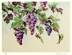 Grape (Japanese Flower and Bird Art) Tags: flower grape vitis vinifera vitaceae keisuke manabe modern screenprint print japan japanese art readercollection