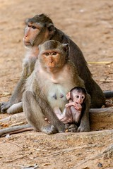Family portrait (catoledo) Tags: 2018 cambodia longtailedmacaquemacacafascicularis siemreap krongsiemreap siemreapprovince kh matchpointwinner mpt641