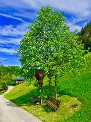 Tree with Jesus cross and bench beside a path in Tyrol, Austria (UweBKK (α 77 on )) Tags: tree jesus cross bench path trail road green field grass rest spring tyrol tirol austria österreich europe europa iphone
