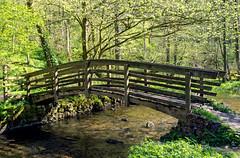 Lathkil stream. (S.K.1963) Tags: elements dale stream bridge derbyshire peak district trees sunlight olympus omd em1 mkii 12 40mm 28 pro lathkil