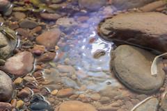 St Mary's Island (Shaun Kane Design) Tags: rock rocks water rockpool rockpools stmarysisland whitleybay northtyneside