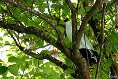 El árbol de la Coca Cola (Franco D´Albao) Tags: francodalbao dalbao fujifilmfinepixhs50exr árbol tree cocacola botella bottle hojas leaves bebida drink