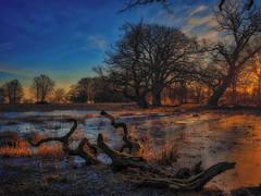 Sunrise at Dyrehaven (ibjfoto) Tags: danmark denmark dyrehaven forest ibjensen ibjfoto natur sealand sjælland woodland skov trees træer