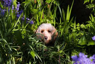 Luna hiding in the undergrowth